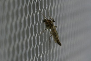 pests on building net before pressure washing services